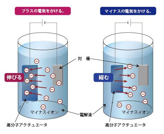 導電性高分子アクチュエータ動作原理